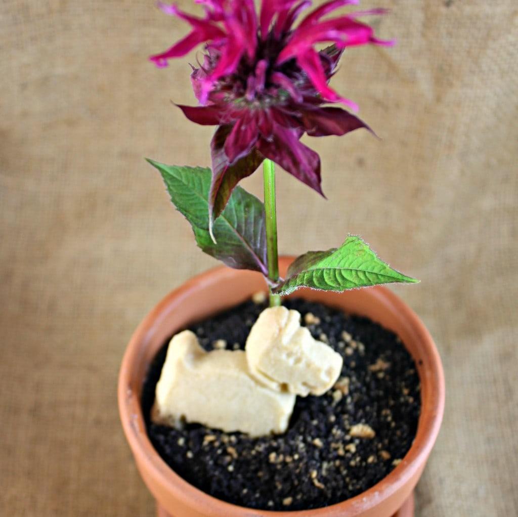 \ Dirt\  Flow Pot Dessert & Dirt\