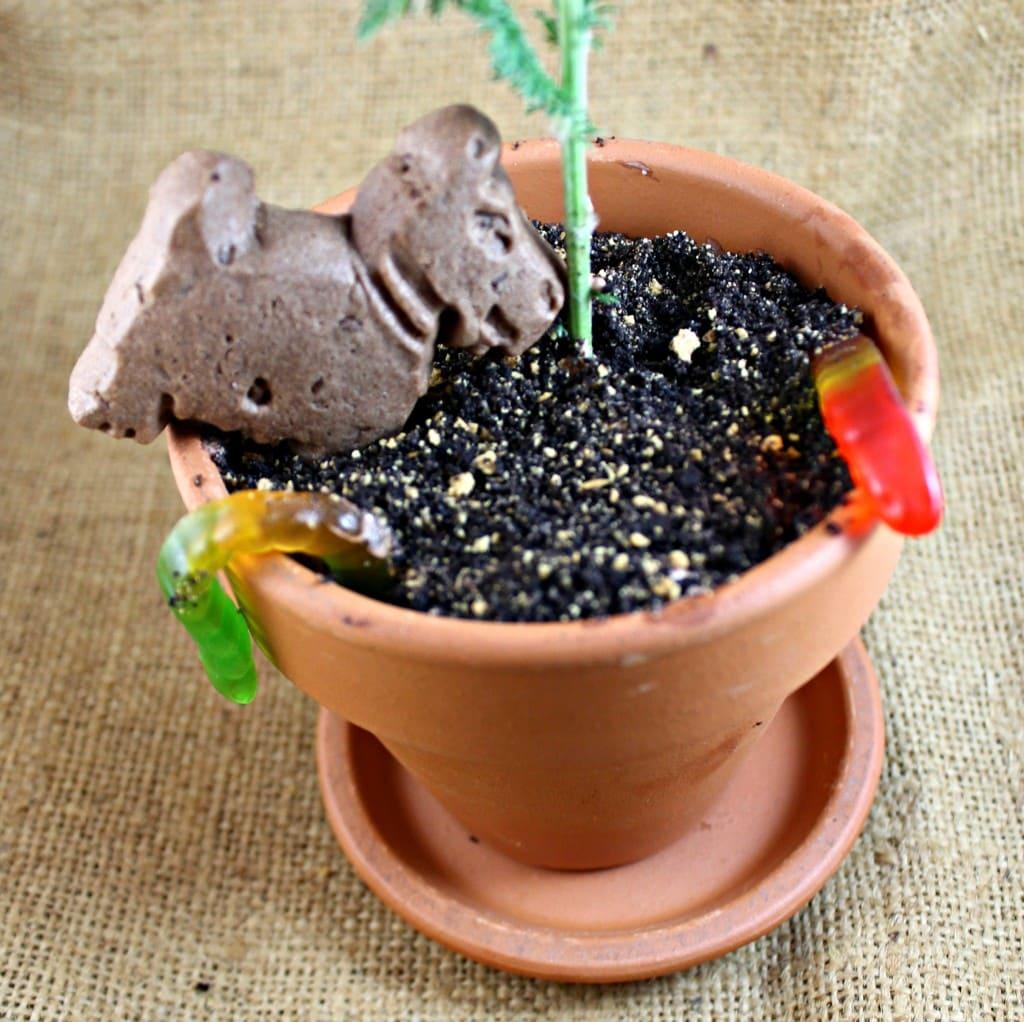 I Can Cook That & \u201cDirt\u201d Flower Pots