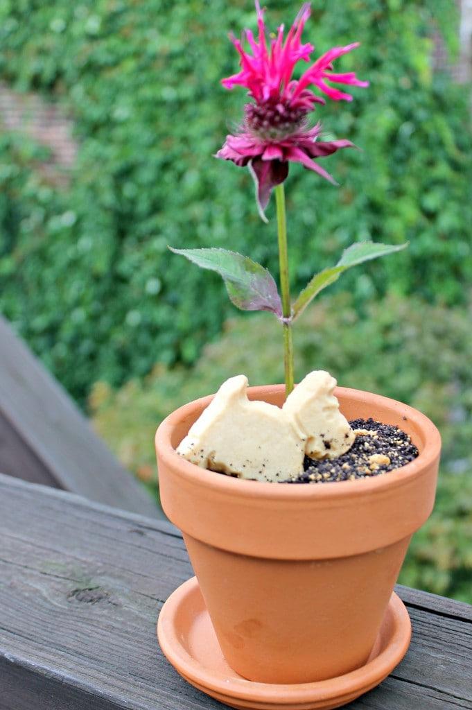 """""""Dirt"""" Flow Pot Dessert"""
